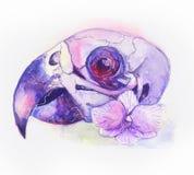 Череп попугая Стоковое фото RF