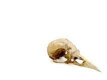 Череп птицы с земной грязью все еще на ей Стоковые Фото