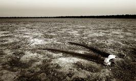 Череп сернобыка Стоковое фото RF