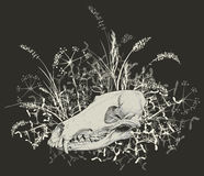 череп хищника Стоковое Изображение RF