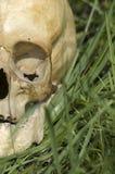 череп человека детали Стоковые Изображения RF