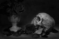Череп человека натюрморта Стоковое фото RF