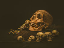Череп человека натюрморта Стоковые Изображения RF
