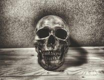 череп человека halloween Стоковые Изображения RF