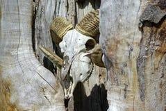 Череп штосселя Стоковая Фотография