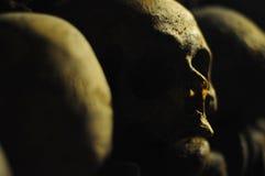 череп стоковое изображение