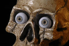 череп 4 Стоковая Фотография