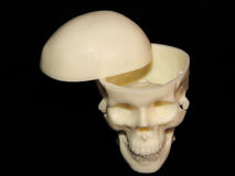 череп стоковые фотографии rf