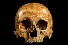 череп Стоковые Фото