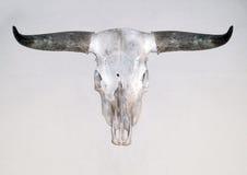 Череп Bull Стоковое Фото