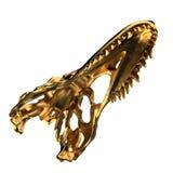 череп dino золотистый Стоковое Изображение RF