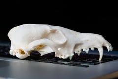 Череп Fox без нижней челюсти на клавиатуре компьтер-книжки Концепция опасностей ИТ Tehology и искусственного Стоковые Изображения
