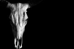 Череп horned животного изолированного на черноте Стоковые Изображения RF
