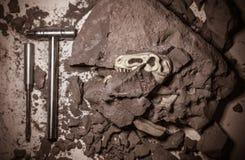 Череп rex тиранозавра, палеонтологические раскопки эры динозавра юрской стоковые изображения