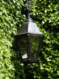 Черная лампа Стоковое Фото