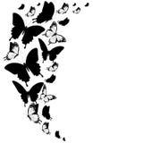 Черная бабочка, изолированная на белизне Стоковая Фотография