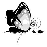 Черная бабочка, изолированная на белизне Стоковая Фотография RF