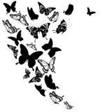 Черная бабочка, изолированная на белизне Стоковое Изображение RF