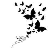 Черная бабочка, изолированная на белизне Стоковые Фото