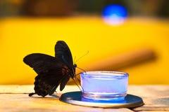 Черная бабочка питьевая вода от бутылок с светами Стоковые Изображения