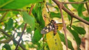 черная бабочка стоковое фото