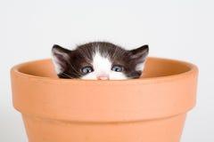 черная белизна бака котенка цветка Стоковое Фото
