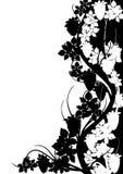 черная белизна картины виноградины бесплатная иллюстрация