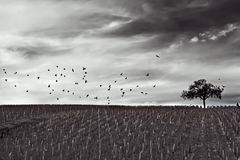 черная белизна ландшафта Стоковое Фото