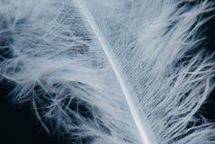 черная белизна пера Стоковое Фото