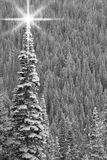 черная белизна рождественской елки Стоковая Фотография RF