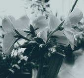 черная белизна цветка Стоковые Изображения