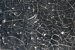черная белизна Стоковые Изображения