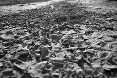 Черная & белая текстура пустыни Стоковая Фотография RF