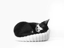 черная белизна спать котенка Стоковое Фото