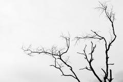 черная белизна Стоковое Изображение