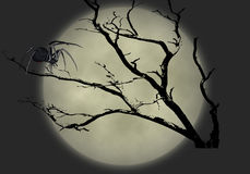 черная вдова иллюстрации 2 Стоковые Фотографии RF