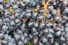 Черная виноградина вина Стоковое Изображение