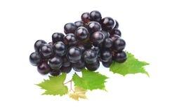 Черная виноградина при лист изолированные на белой предпосылке Стоковое Изображение