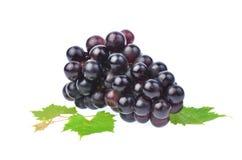 Черная виноградина при лист изолированные на белой предпосылке Стоковые Изображения RF