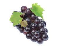 Черная виноградина при лист изолированные на белой предпосылке Стоковое Изображение RF