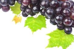 Черная виноградина при лист изолированные на белой предпосылке Стоковые Изображения