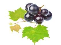 Черная виноградина при лист изолированные на белой предпосылке Стоковая Фотография RF