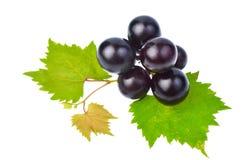 Черная виноградина при лист изолированные на белой предпосылке Стоковая Фотография