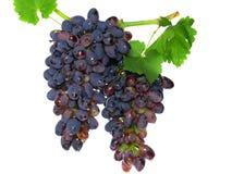 Черная виноградина Стоковая Фотография