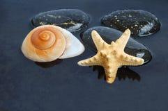 черная вода seashells Стоковое Изображение RF