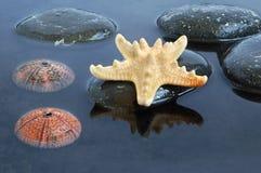 черная вода seashells Стоковое Фото