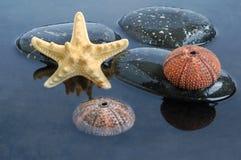 черная вода seashells Стоковые Изображения