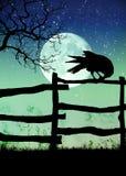 Черная ворона на загородке Стоковое Изображение