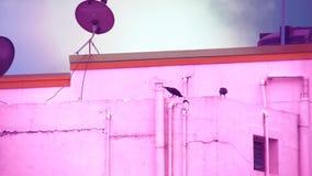 Черная ворона сидя на трубе в верхней части дома при облака проходя на предпосылку голубого неба акции видеоматериалы