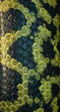 черная зеленая змейка кожи Стоковая Фотография RF